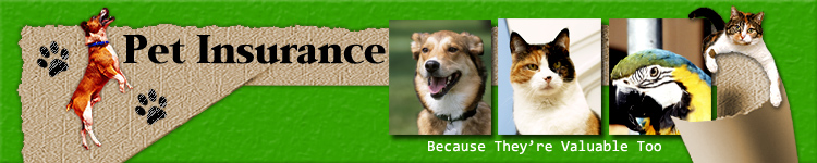 pet insurance header graphic